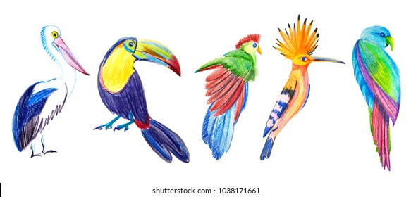 Illustration of colored tropical birds. Toucan, parrot, hoopoe, pelican