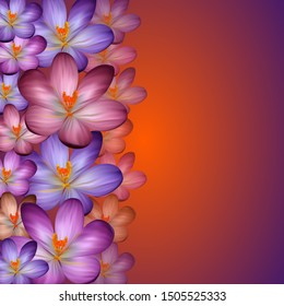 Illustration of colorful border from crocuses with background