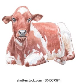 Illustration with cow. Watercolor. Hand drawn.
