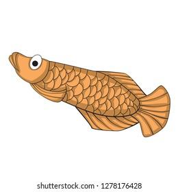 Illustration of cute arowana.