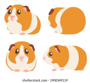 Illustration of cute guinea pigs from various angles