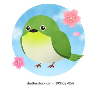 Illustration of cute white-eye and cherry blossoms Japanese style