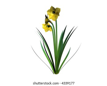 Illustration of a daffodil