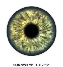 An illustration of a dark green brown human iris