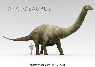 An illustration of the Dinosaur Apatosaurus (formerly known as Brontosaurus) depicted alongside an average height human. Apatosaurus is an extinct genus of sauropod dinosaur of Late Jurassic period.