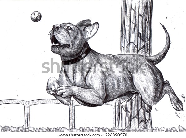 Illustration Dog Jumping Trying Catch Ball Stock