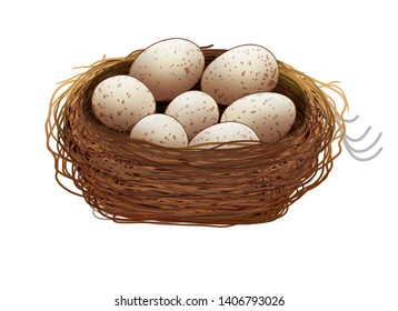 illustration of eggs and eggs with nets