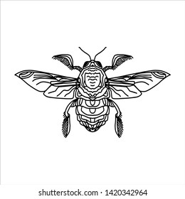 Illustration of the engraving highly detailed hand-drawn beetle with wings, insect on white background - pattern for print.