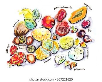 illustration of exotic fruits