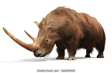 An illustration of the extinct Woolly Rhinoceros on a white background. The woolly rhinoceros was a member of the Pleistocene megafauna, common throughout Europe and northern Asia.