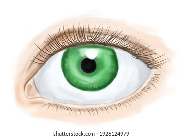 illustration of an eye with a green pupil and risnits on a white background