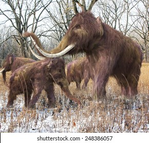 An illustration of a family of Woolly Mammoths feeding on wild grass in an ice age forest. The Woolly Mammoth is an extinct species of elephant existing during the later part of the Pleistocene Epoch.