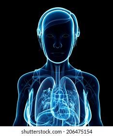 Illustration of female x-ray respiratory system artwork
