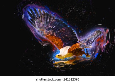 Illustration of a flying African fish eagle (Haliaeetus vocifer)