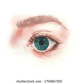 Illustration of a forward looking eye. Watercolor technique, freehand drawing.