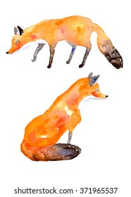 illustration of foxes