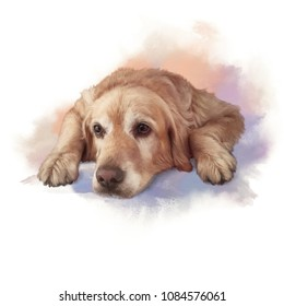 Illustration of a Golden Retriever. Guide dog, assistant to disabled people. Watercolor Animal collection: Dogs. Realistic drawing - Hand Painted Illustration of Pet. Good for banner, T-shirt, pillow.