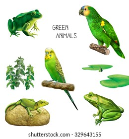 Illustration of green tropical animals and plants: green parrot, Budgerigar, lizard, green toad or a frog, green water lily leaves isolated on white background