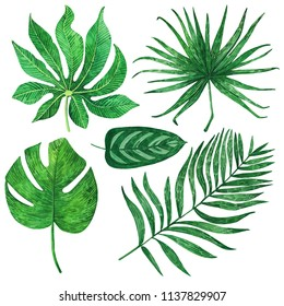 illustration of green tropical leaves