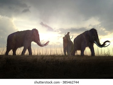 An illustration of a group of Woolly Mammoths grazing in a field in the sunset.