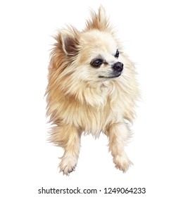 Illustration of handsome dog isolated on white background. Mittel German Spitz. Small Dog Breeds. Realistic Hand drawing of a puppy. Animal art collection. Design template. Good for pet shop, T-shirt