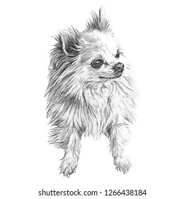 Dog Drawing Images, Stock Photos & Vectors | Shutterstock