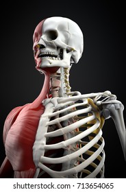 Illustration of the human body upper skeletal system and muscles in an artistic view