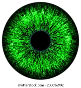 Illustration of human green eye on white background