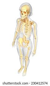 Illustration of human skeleton side view