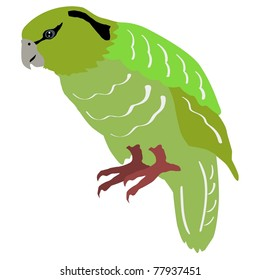 Illustration of kakapo