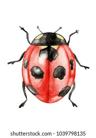 Illustration ladybug watercolor on white background isolated