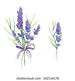 Illustration of lavender flowers. Isolated on white. Made in watercolor