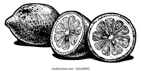 illustration of a lemon  stylized as engraving.