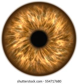 Illustration of a light brown human iris. Digital artwork creative graphic design.