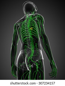 Illustration of male body lymphatic system