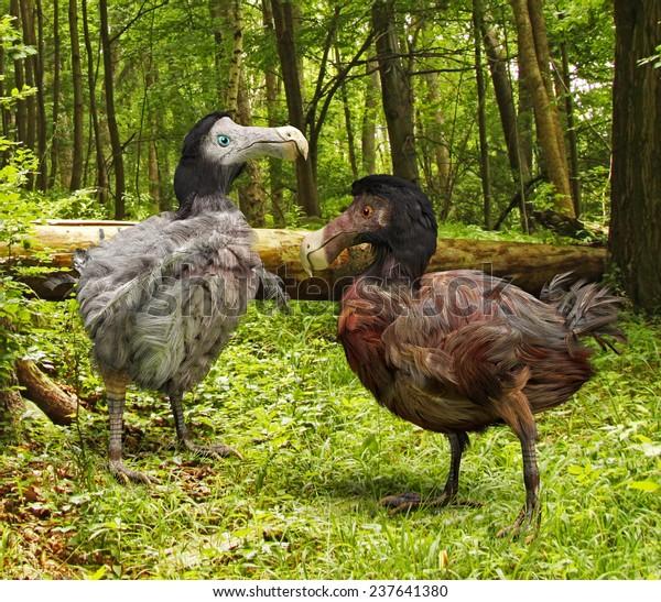 obrázky mužských ptáků černá dospívající porno trubice