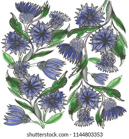 Illustration of meadow flowers. Risunok cornflowers in watercolor with a black outline. Print from blue cornflowers