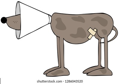 Illustration of a neutered or spayed dog with a cone on its head.