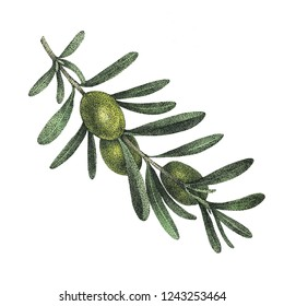 Illustration of olive branch. Great for textile design, home decor, postal packaging, wallpapers, cards, print, wrapping paper etc.