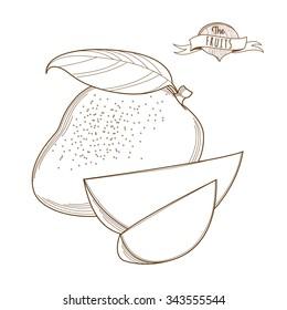 illustration Outline hand drawn mango, (flat style, thin line). Single mango, part of mango, isolated