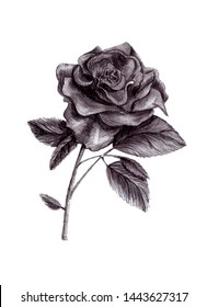 illustration of a pencil rose on a white background