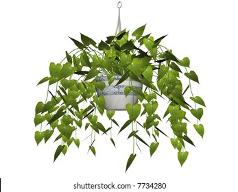 Illustration of a philodendron, a hanging plant