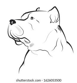 Illustration - Pitbull on a white background.