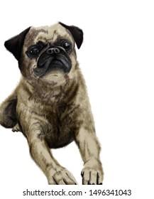 illustration of Pug dog lying down, digital drawing