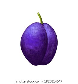 Illustration of a purple plum. Isolated fruit with texture on white background