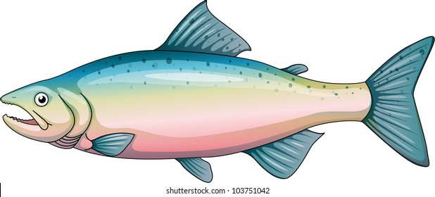 Illustration of a rainbow trout - EPS VECTOR format also available in my portfolio.