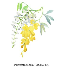 Illustration with realistic watercolor. Tropics. Beautiful bouquet with tropical flowers and plants on white background. Yellow ans white wisteria.