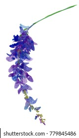 Illustration with realistic watercolor. Tropics. Beautiful bouquet with tropical flowers and plants on white background. Purple wisteria.