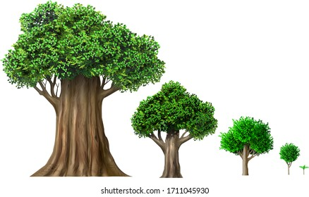 Illustration. Set of different oak trees growth stages. Deciduous trees