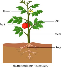 plant part images, stock photos \u0026 vectors shutterstock label the parts of a tree (and trunk)